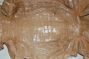 tan alligator hide, gator skin, leather
