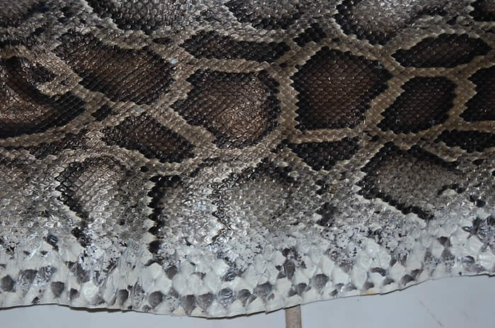 Python Snake Skin Hide Leather