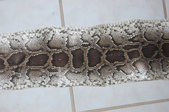 Python Snake Skin Leather Hide