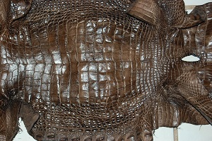 alligator leather, gator hide, alligator skin
