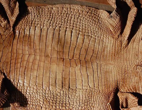 Bark tanned alligator hide - gator leather/skin