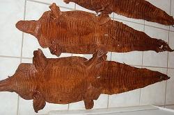 bark tan alligator hide, gator leather/skin